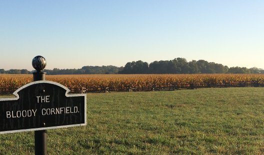 Miller's Cornfield, Antietam National Battlefield. Photograph by Brian Downey, 17 September 2015